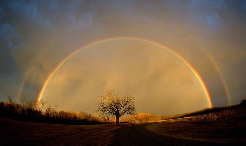 Rainbow_elam_2