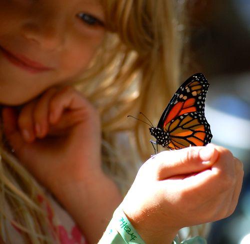 Metamorphos Butterfly